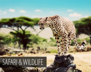 Travel Inspiration - Safari and Wildlife