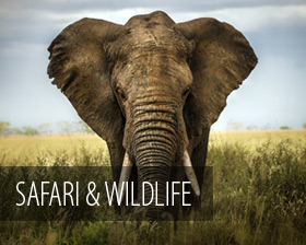 safari and wildlife